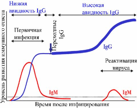 Test immunoenzymatyczny (ELISA),
