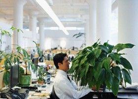 Kućne biljke štite kancelarijski radnici od bolesti
