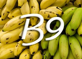 Vitamina B9 (folna kiselina)